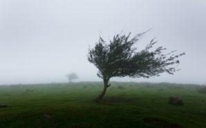 Usuwanie skutków silnych wiatrów