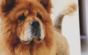 Bądź odpowiedzialnym opiekunem psa